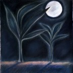 Untitled 132 (night plants)