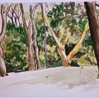 Untitled 158 (trees)